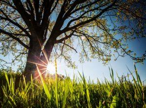Healing Qualities in Nature